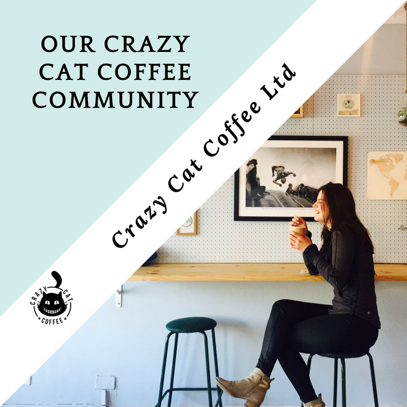 Crazy Cat coffee website